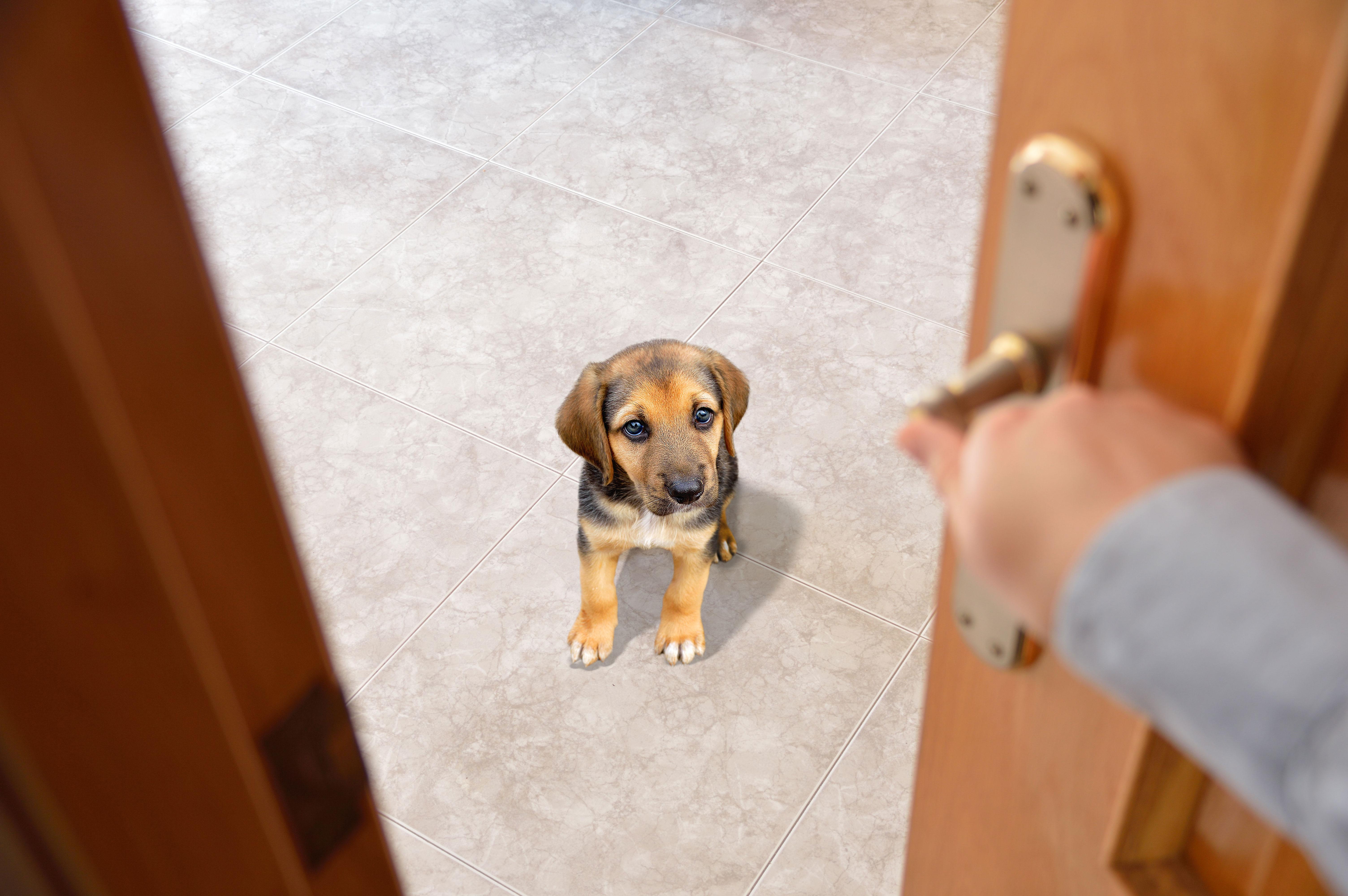 ¿Qué hace mi perro cuando está solo?