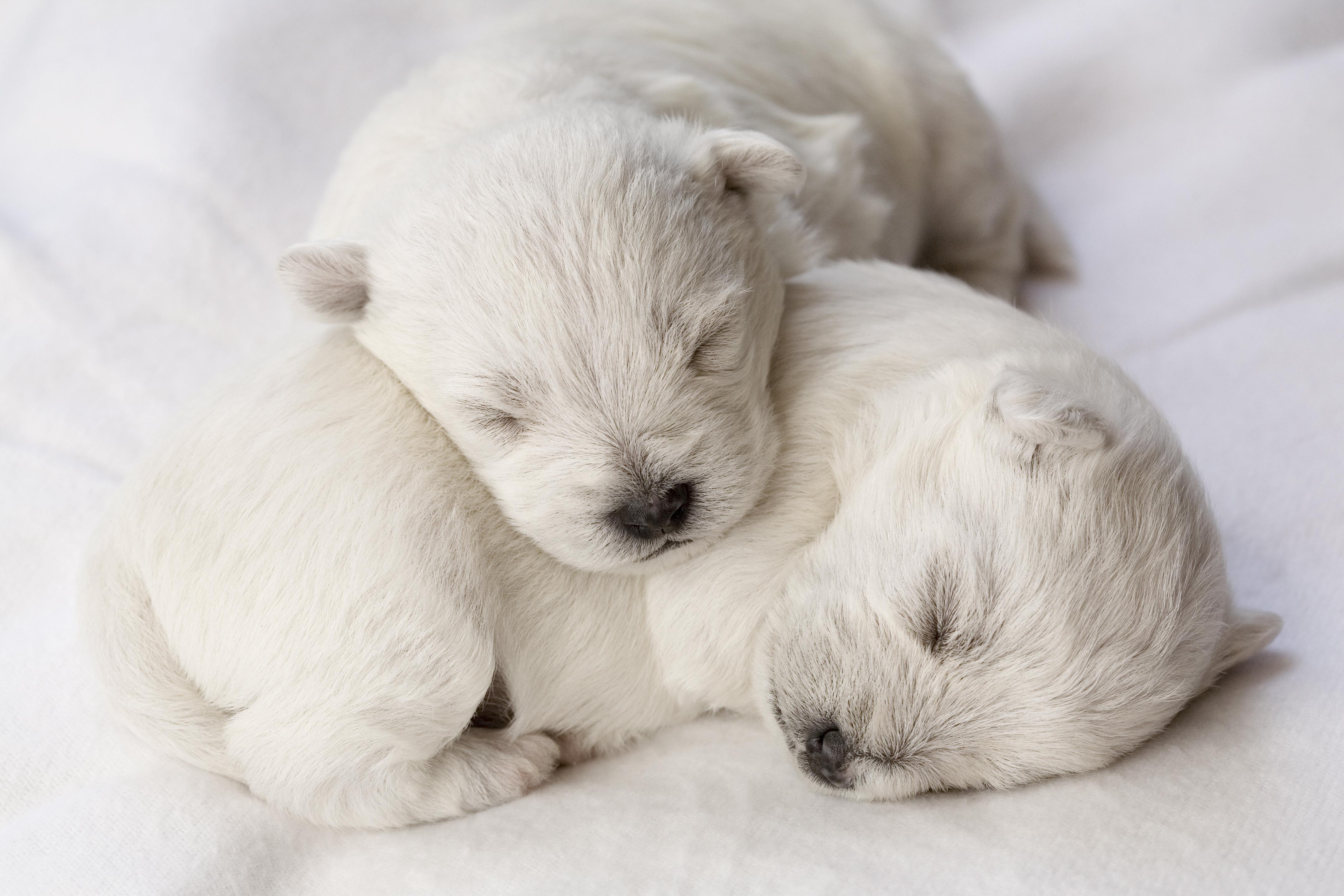 10 consejos para cuidar a tu nuevo cachorro