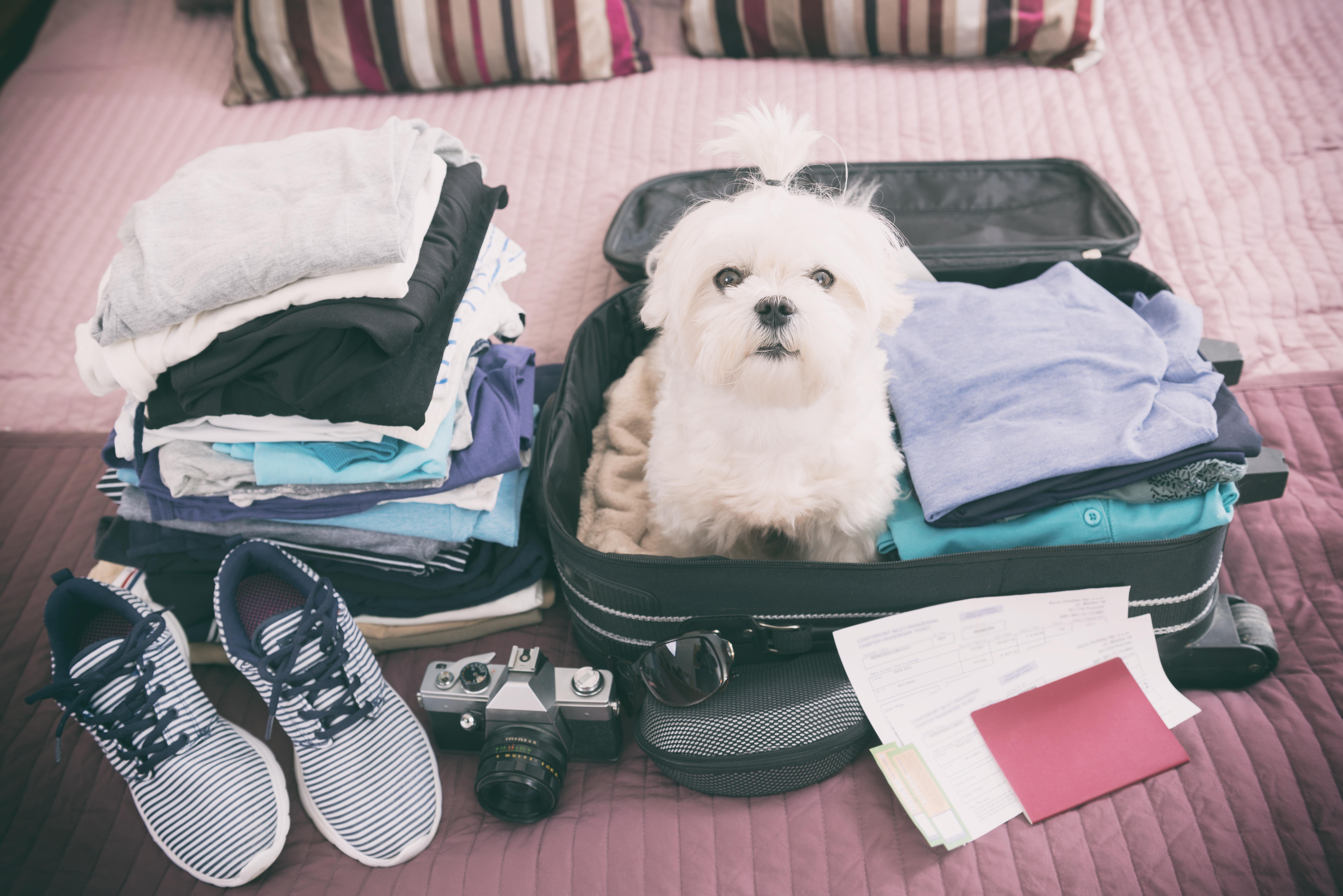 de vacaciones con mi perro