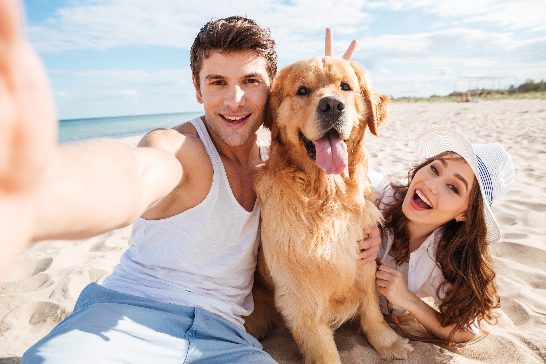¡Disfruta con tu perro en la playa! Aprende cómo hacerlo