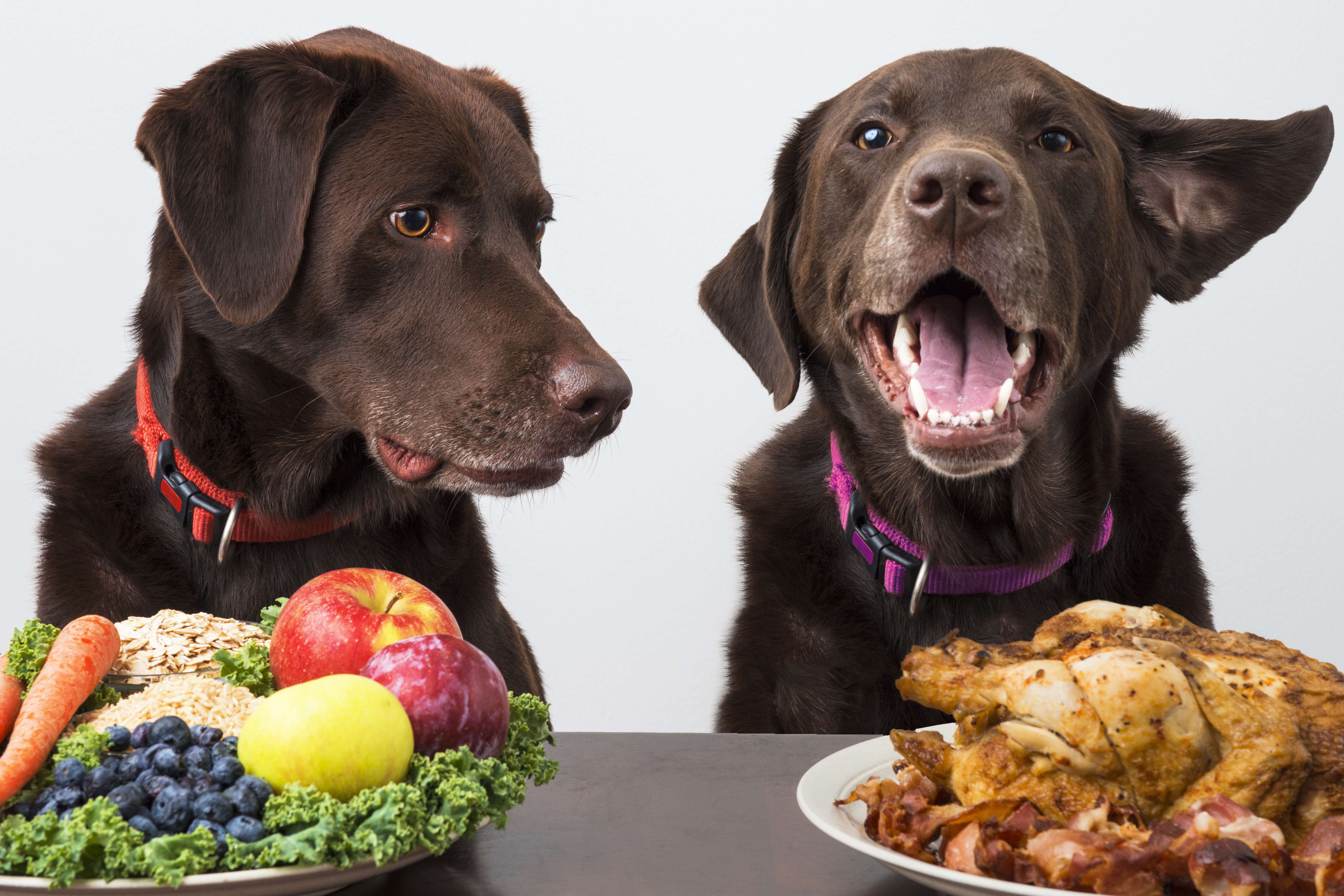 Receta de arroz y verduras para perros