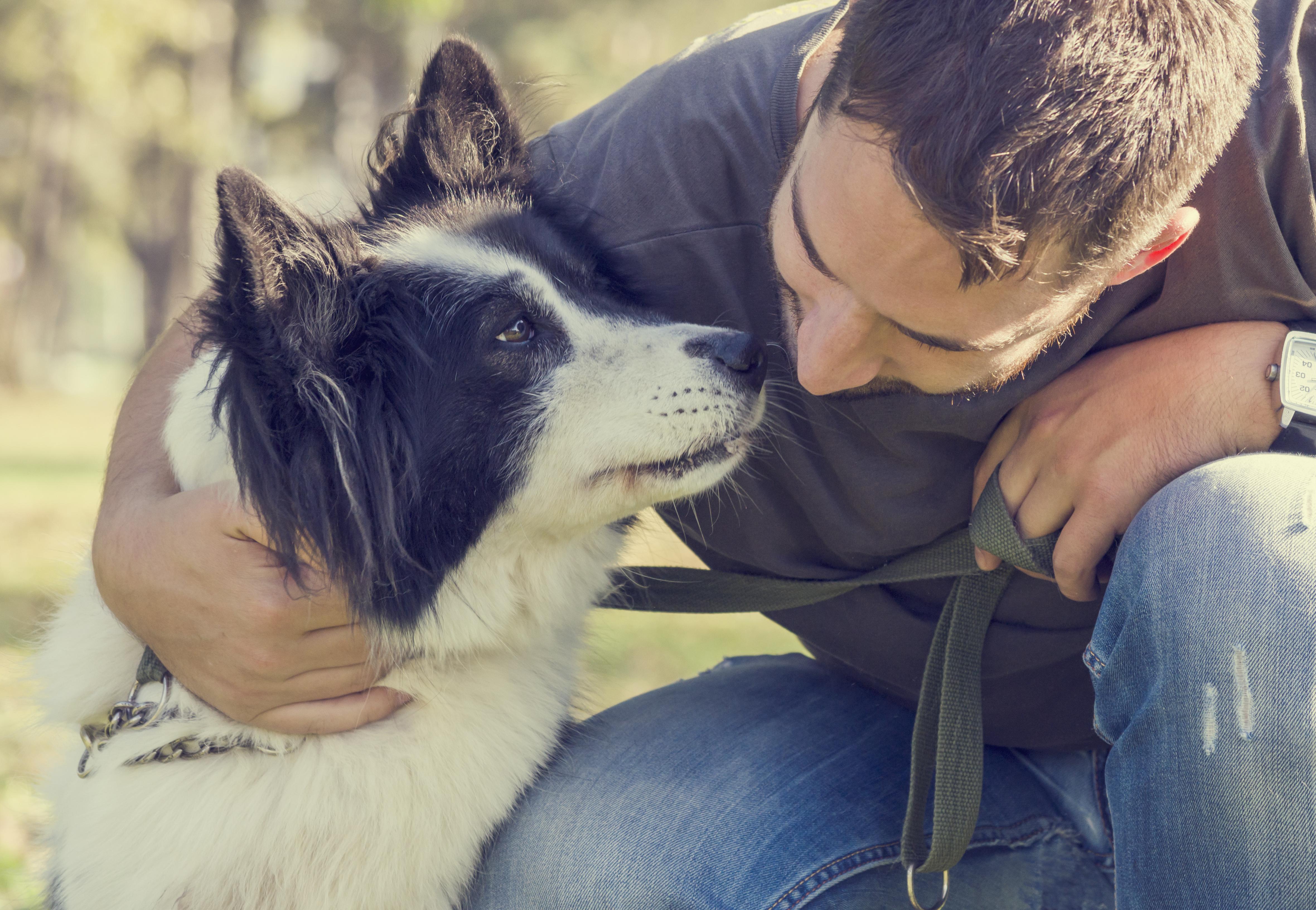 Cuidador certificado vs. guardería para perros